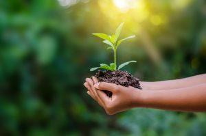 teoria da sustentabilidade